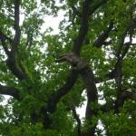 Meditations träd
